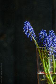 Wild flowers. by Darren Muir