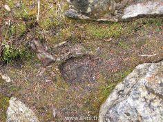 Trace d'ours fraiche dans les Montagnes Rocheuses Canadiennes