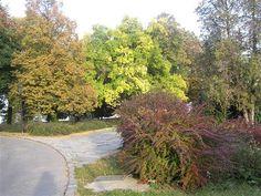 Bratislava - Hradné záhrady 2