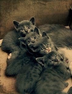 Cute Little Faces