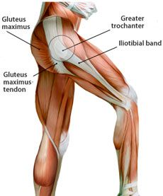 External snapping hip syndrome occurs when the IT band or gluteus maximus tendon catch on the greater trochanter. stretching tips, flexibility Muscle Anatomy, Body Anatomy, Human Anatomy, Hip Muscles Anatomy, Hip Flexor Pain, Hip Pain, Hip Flexors, Snapping Hip Syndrome, Psoas Iliaque