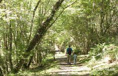 Planes con niños: paseando por la senda de La Ñora (Gijon)