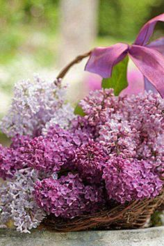 A basket of lilacs