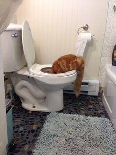 Crazy cat , kitten antics