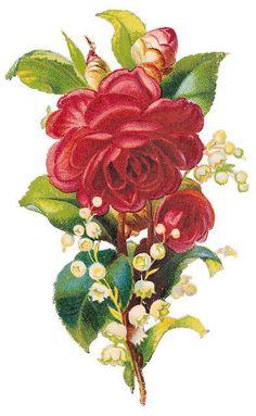 Flowers258 vintage illustration