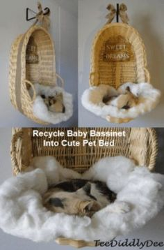 Baby Bassinet Pet Bed Recycle baby bassinet into an absolutely adorable and unique pet bed! Works well for both cats and small dogs!)Recycle baby bassinet into an absolutely adorable and unique pet bed! Works well for both cats and small dogs! Unique Animals, Cute Animals, Gato Gif, Gatos Cats, Cat Enclosure, Baby Bassinet, Baby Crib, Cat Condo, Cat Room