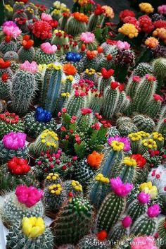 Giardino dipiantine grasse fiorite