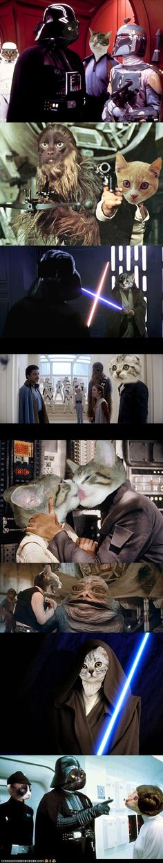 funny pictures - Famous 'Star Wars' Scenes Redone With Cats