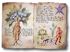 Wicca by Lumen Radio: Le Erbe e le piante, tutto quello che una Wiccan p. Illustration Botanique, Illustration Art, Illustrations, Garden Journal, Nature Journal, Aleister Crowley, Liquid Watercolor, Book Of Shadows, Illuminated Manuscript