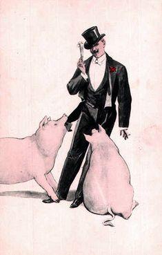 Man & pigs