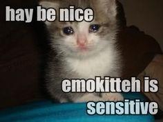 Poor emo kitty :3