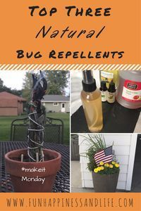 Natural homemade bug repellents are a great alternative to using DEET. These plants and essential oils can ward of mosquitoes and other biting insects so you can enjoy your summer without all the toxins Home Remedies, Natural Remedies, Holistic Remedies, Holistic Healing, Garden Bugs, Insect Repellent, Along The Way, Natural Living, Allergies