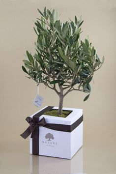 bonsai regalo chic - Buscar con Google