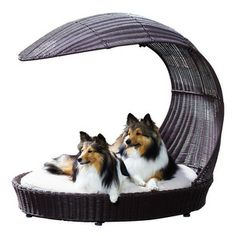 Outdoor Dog Chaise Lounger - When you're hanging out by the pool, your furriest friends can be relaxing right along with you. Place this wat...