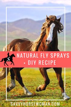 Natural Fly Spray for Horses   DIY Recipes | Horse Care Tips from Savvy Horsewoman