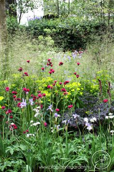 RHS Chelsea Flower Show 2014 - RBC Waterscape Garden by Hugo Bugg