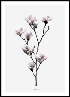 Vakkert fotografi av en magnoliablomst