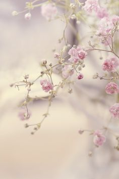 Flower Tree by ~Lady-Tori