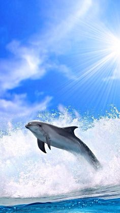Download free Dolphins Mobile Wallpaper contributed by