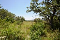 Treed areas