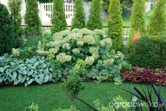 brunera Ogród mały, ale pojemny;) - strona 61 - Forum ogrodnicze - Ogrodowisko