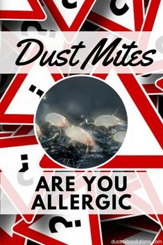 Many people experience allergy symptoms but they don't know the culprit. Dust mites are invisible to the naked eye and can be a nuisance in our homes. They actually eat out dead skin. Find out if your symptoms are signs of dust mite allergy Dust Mite Allergy, Allergy Shots, Skin Rash, Dust Mites, Dead Skin, Asthma, How To Know, Natural Health, Natural Remedies