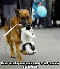 Attack Of The Funny Animals - 32 Pics