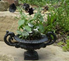 05 08 2016 Gothic Garden Decor Black Cast Iron French Urn With Black Flowers