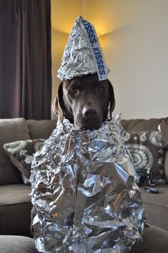 Hershey Kiss Dog Halloween Costume. Pretty appropriate for a chocolate lab.
