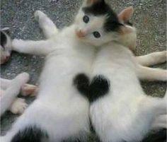 هذا هو الحب | Astafid