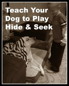 Teach your dog to play hide & seek with your kids