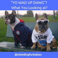 These cool dogs are saying they deserve to not be harassed by fleas and ticks this summer. Check out our link in the bio and give your pet some chemical-free relief. 💓🐕🐾 Furry Babies Rock! 🐶🐾 Follow us@shieldingfurbabies 👇Tag your friends📌📍 #shieldingfurbabies #dogsofinstagram #petprotector #funny #downwithfleas