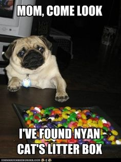 This dog is right, he's found Nyan Cat's litter box! xD
