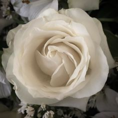 Busca na internet Rosas Brancas As rosas brancas representam a pureza e a inocência e podem ser associadas com as grandes uniões e os novos começos.  Esta rosa é também um símbolo de honra reverênciarespeitoesperança lembrança e espiritualidade. Há alguns mitos e lendas de diversas culturas diferentes que se relacionam à origem da primeira rosa branca trazendo uma aura de misticismo e pureza acerca desta flor.É sabido também que a rosa branca é uma flor tradicional em casamentos. Neste…