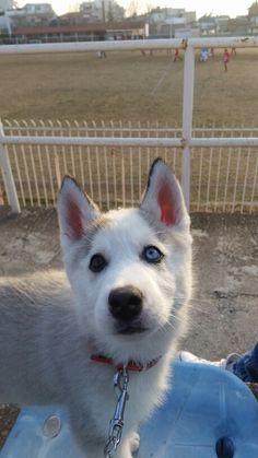 L💙ve my #puppy