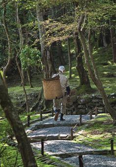 Beautiful Japanese Zen gardens: in pics - Telegraph Path Edging, Edging Ideas, Mini Zen Garden, Green Garden, Garden Trees, Garden Paths, Evergreen Hedge, Flat Stone, Water Element