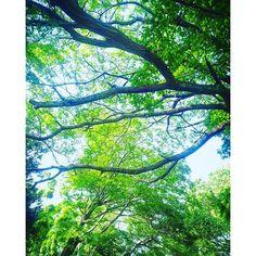 【riko844】さんのInstagramをピンしています。 《森林浴✨✨ マイナスイオンたっぷりで、とても癒やされました🎵 #森林浴 #森林 #木 #木漏れ日 #マイナスイオン #木の葉 #写真好き #写真好きな人と繋がりたい #ファインダー越しの私の世界》