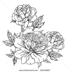 Peony: Vintage hand-drawing background with flowers. Vector illustration isolated on white.