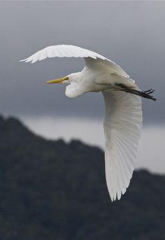 Birds of Aotearoa.
