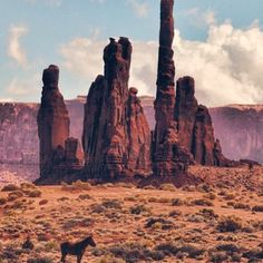 "scenic-southwest: ""Lone Horse in Monument Valley by Jeff Clow from "" Parc National, National Parks, Monument Valley, Nationalparks Usa, Illustration Photo, Desert Dream, Desert Rose, Into The West, Photos Voyages"