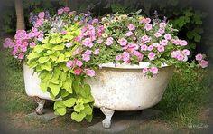 pinterest bath tub gardens | bath garden 600x378 Flower Garden in a Bathtub in garden art with ...