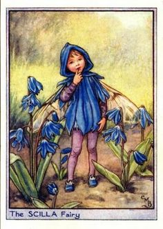 Scilla Flower Fairy Vintage Print by Cicely Mary Barker, first published in London by Blackie, 1944 in Flower Fairies of the Garden.