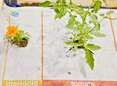 Nourishmat! Makes gardening a no-brainer...now if we could only get the sun to cooperate!!