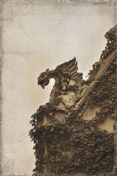 Gargoyle. Ivy covered wall.