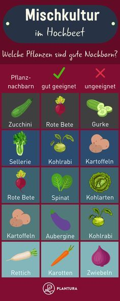 Mischkultur im Hochbeet: Welche Pflanzen sind gute Nachbarn – Beispiel Ob Zuc… Mixed culture in the raised bed: Which plants are good neighbors – Example Whether zucchini, potatoes or spinach: A raised bed can be equipped with many… Continue reading → Plants For Raised Beds, Raised Garden Beds, Garden Types, Herbs Garden, Container Plants, Container Gardening, Compost Container, Succulent Containers, Container Flowers