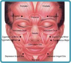Madeleine-Stowe-Plastic-Surgery-Before-and-After-Photos-Facial-Botox-on-Forehead… – Facial muscles – Botox Injection Sites, Botox Injections, Muscle Names, Relleno Facial, Madeleine Stowe, Muscles Of The Face, Facial Anatomy, Botox Cosmetic, Facial Aesthetics
