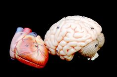 Stress and the brain effects on the heart