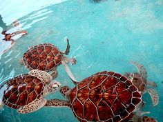 Sea Turtles!