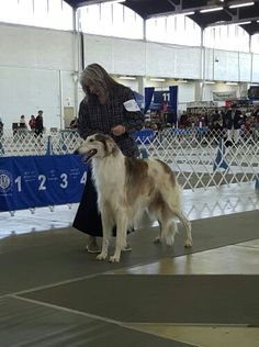 Rusti (Borzoi) is from our Warrior litter born in September Dog Breeds, Animals, Animales, Animaux, Animal, Animais, Horse Breeds