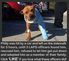 dog rescued & adopted by police officers